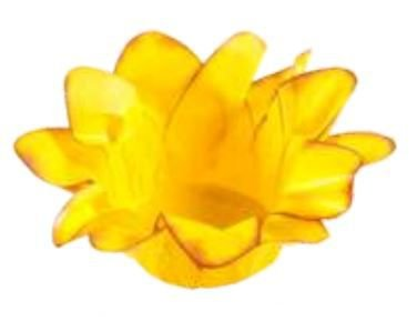 Forminha Lirio Amarelo Queimado c/40 Decora Doces