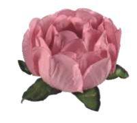 Forminha Bela Rosa Seco I c/40 Decora Doces