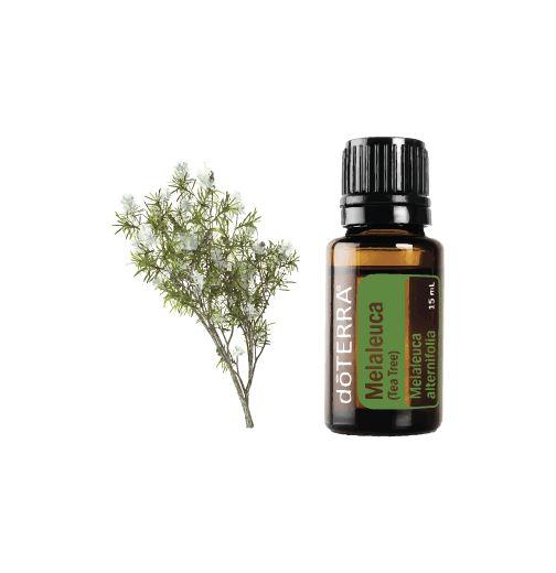 Melaleuca - Tea Tree 15ml
