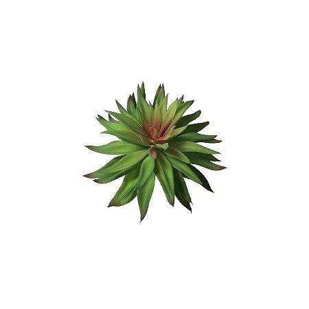 Suculenta Giovana SY01495