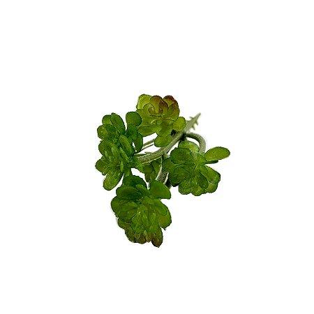Suculenta Mini Ana FS0694-30