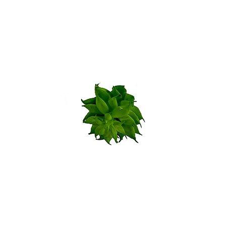 Mini Suculenta Rosa