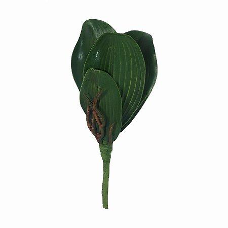 Folha de Orquidea Eva