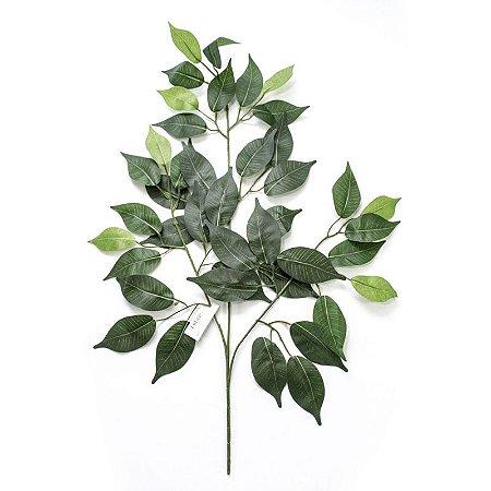Folha de Ficus Varigata M3036