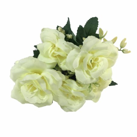 Rosa Graciosa