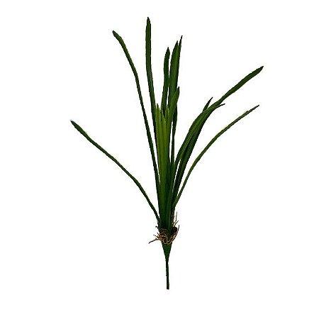 Folha de Orquidea Comprida