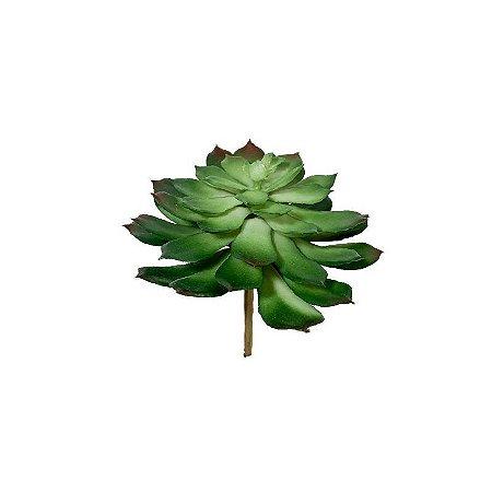 Suculenta Bruna