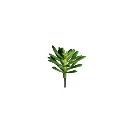 Mini Suculenta Natalia SY01497
