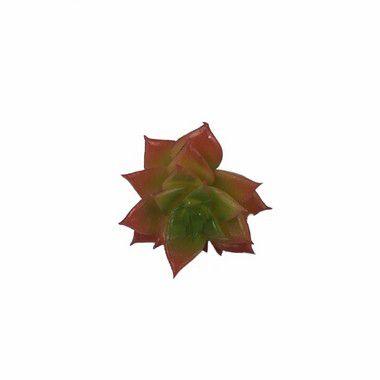 Suculenta Mini DI0138