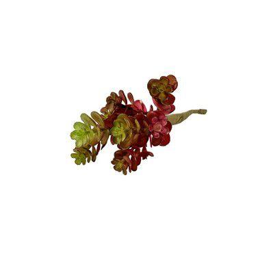 Suculenta Mini Isa 9165-75