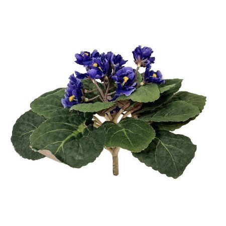 Buque de Violeta HAB1271