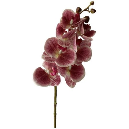 Galho de Orquídea Siliconada Fran DM-0013PB