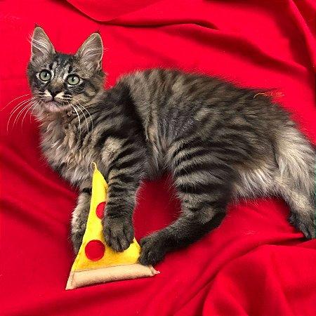 PIZZA - Brinquedo c/ catnip para gatos