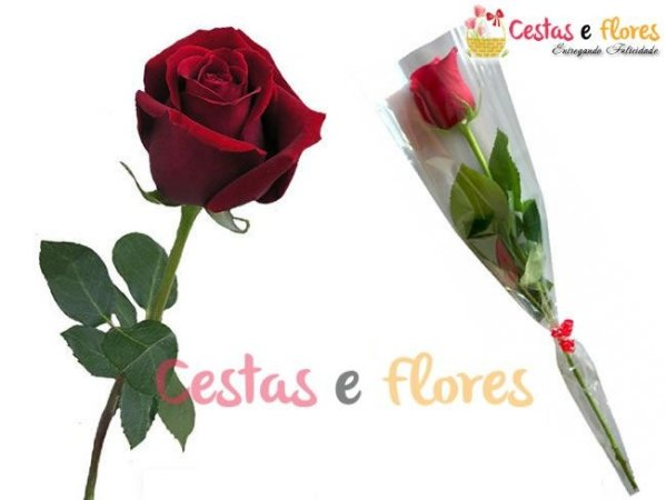 Rosa Solitária Vermelha Carola - Unidade