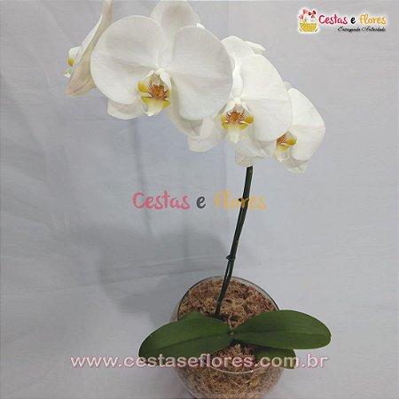 Orquídea PHALAENOPSIS Branca - Uma Haste - Vaso de Vidro