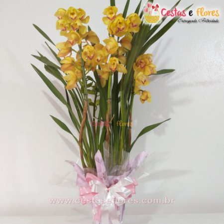 Orquídea Cymbidium Amarelo Ouro