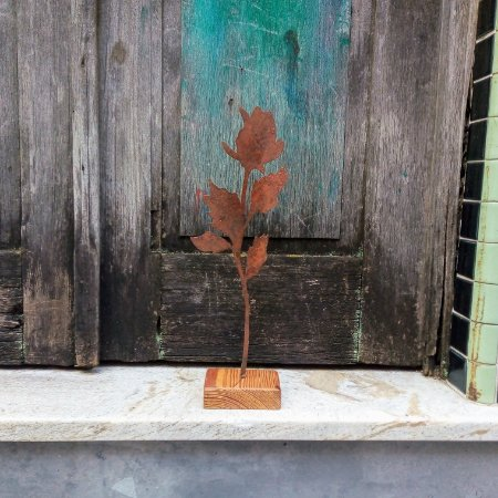 Rosa de ferro