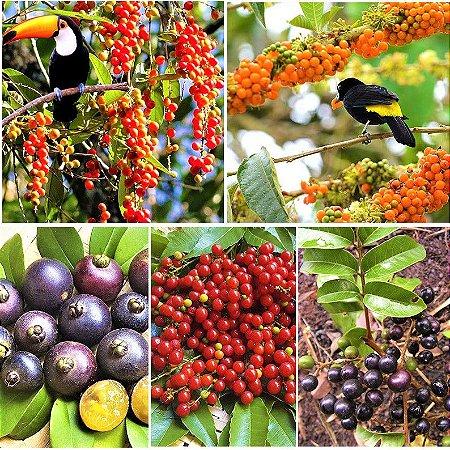Kit 5 Frutíferas Atrativas de Pássaros - Fruto do Sabiá - Fruto do Tucano - Fruto do Pombo - Cha Chal - Guabiju