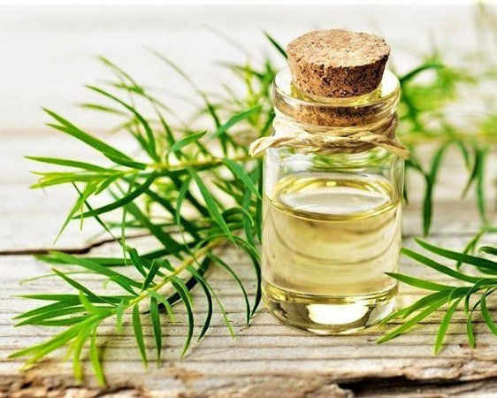Óleo Essencial de Melaleuca - 100% Natural - 05 ml