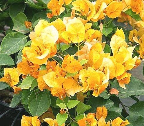 Primavera de Flores Amarelas Alaranjadas