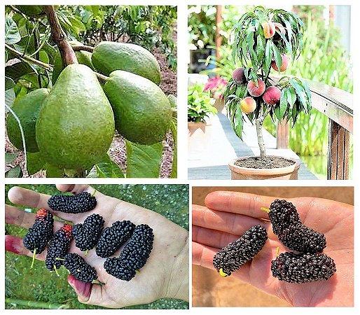 Kit Perfeito 3 Frutíferas Para Vasos - Amora Gigante - Goiaba Gigante - Pessegueiro Anão