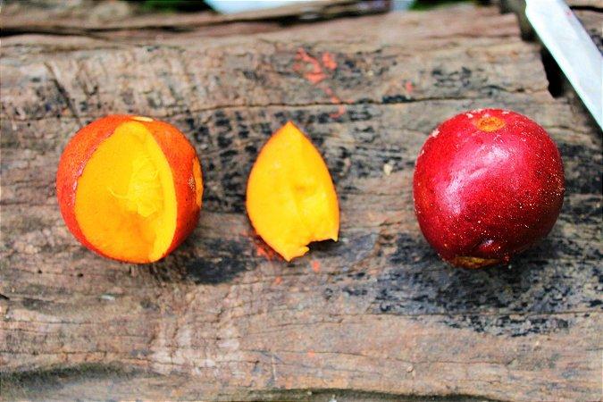 Envira Cajú - Onychopetalum Periquino - Considerada a melhor fruta da Amazônia!