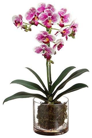 Orquídea Phalaenopsis PN132VB