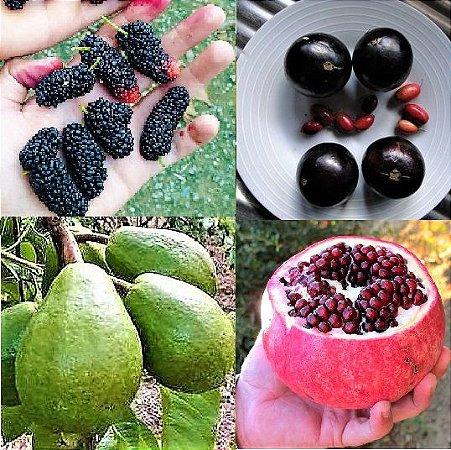 Kit Frutas Gigantes 4 Tipos - Goiaba Gigante - Amora Gigante - Romã Gigante - Jabuticaba Gigante