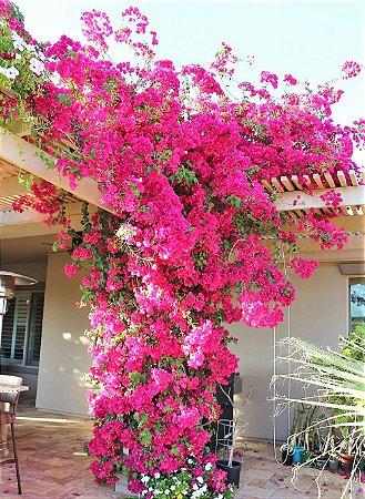 Primavera de Flores cor Melancia