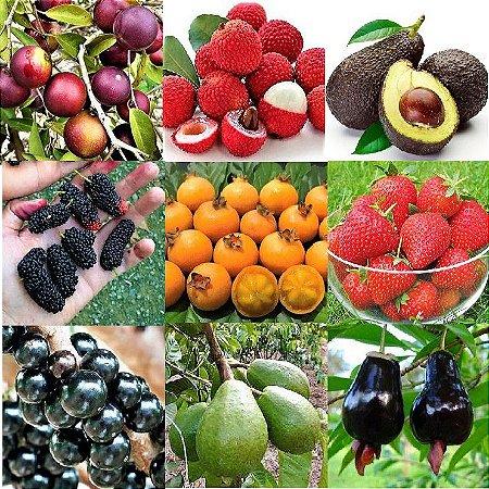 KIT PREMIUM 9 SUPER FRUTAS - Avocado - Lichia - Morango - Goiaba Gigante - Amora Gigante - Jabuticaba -Acerola - Cereja - Guabiroba