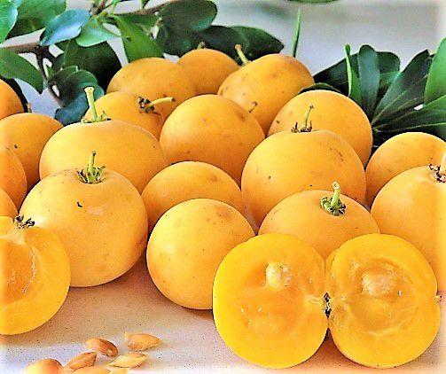 Damasco Tropical - Kei Apple - Maçã Kei ou Dovyalis caffra - Arbustiva,  Deliciosa e Muito Produtiva