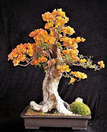 Bonsai De Primavera Flores Cor-De-Telha