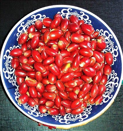 Fruta do Milagre - O Milagre do Sabor - Arbustiva p/ Vasos