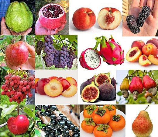 Kit Tudo 16 Frutíferas p/ Vasos em até 10 vezes de R$69,90 Sem Juros