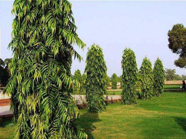 Árvore Mastro
