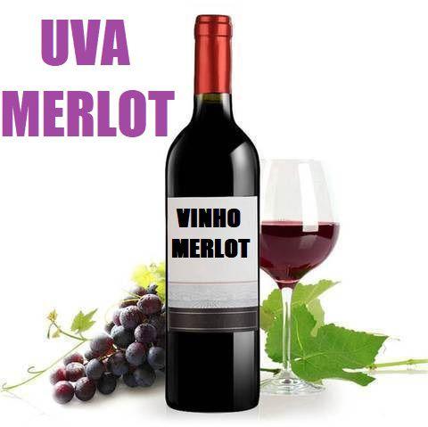 Merlot Uva de Vinho - Mudas Enxertadas