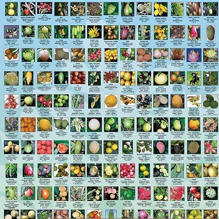 Kit Pomar Frutas Exóticas c/ 5 Tipos de Mudas - Amora Gigante - Pitaya Vermelha - Jabuticaba Gigante - Achachairu Boliviano - Fruta do Milagre - MUDAS - Pomar de Frutas Exóticas