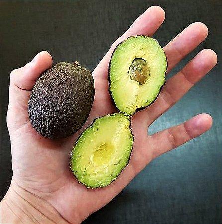 Avocado Bombom ou Hass - Fruta Doce - Muda Enxertada e Produz em Vaso