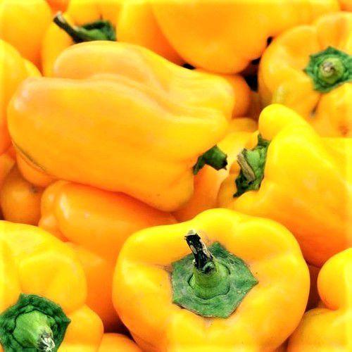 Pimentão Amarelo Alegria - kit c/ 12 Sementes