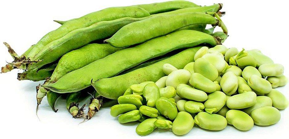 Fava de Sevilha - Kit c/ 10 sementes