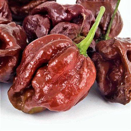 Pimenta 7 Pot Douglah Chocolate - Kit c/ 20 sementes
