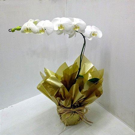 Orquidea Phalenoplis Branca