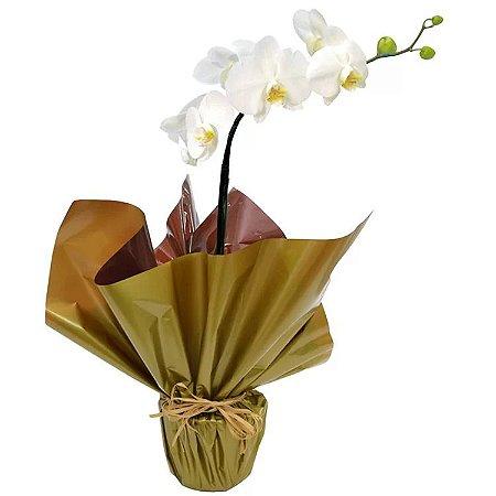 Orquídea Phalaenopsis Branca de 1 Hast