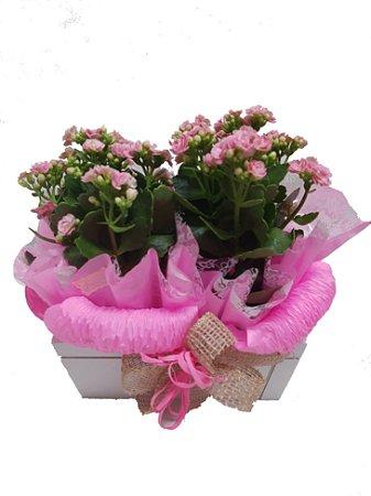 Floreira com Calandivas ( podendo variar cores )