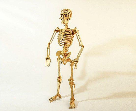 Quebra-cabeça 3D Esqueleto Humano (6 anos+)