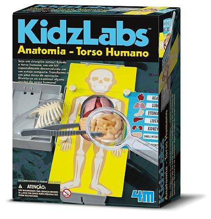 Anatomia Torso Humano (8 anos+)