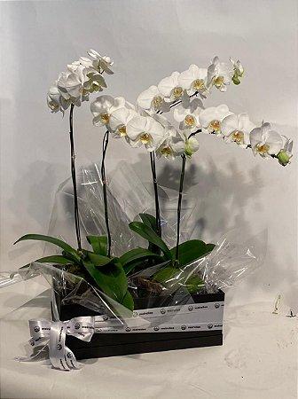 Arranjo Natural com Orquídeas Phalaenopsis Brancas 4 hastes