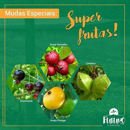 Super Frutas da Mata Atlântica (Valor da unidade caixa 50 mudas)
