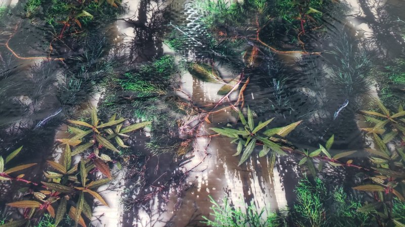 pelicula para pintura hidrografica modelo CAMUFLAGEM PANTANAL   tamanho 1 mts de comp x 50 cmts largura