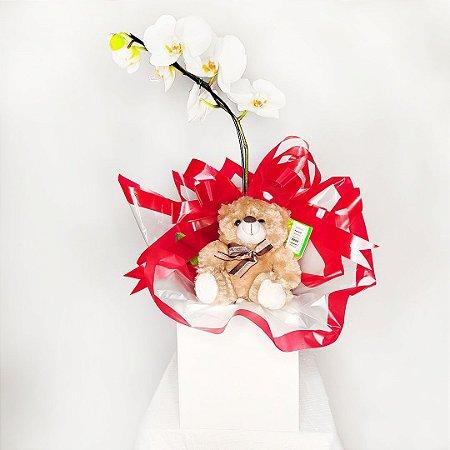 Orquídea Carinhosa